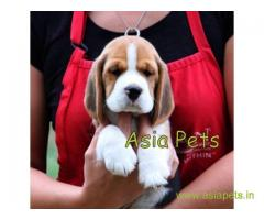 BEAGLE price IN INDIA